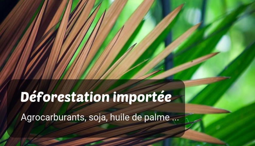 Comment l'État veut mettre fin à la déforestation importée avant 2030