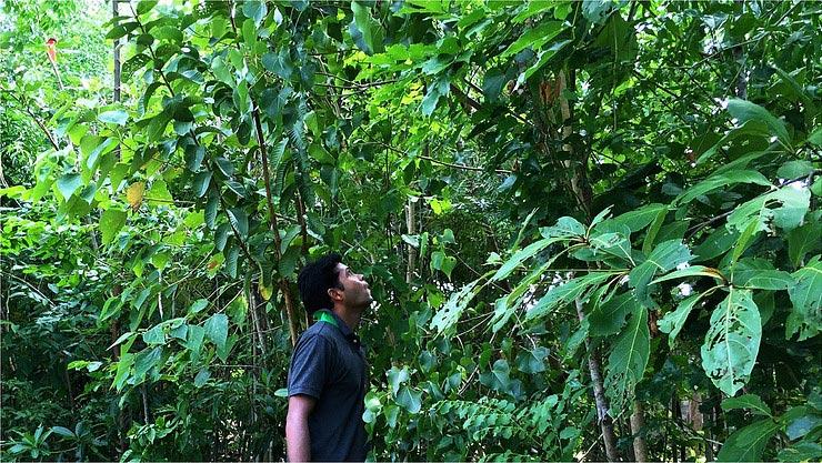 Cette startup veut faire pousser des forêts dans nos centres-ville !
