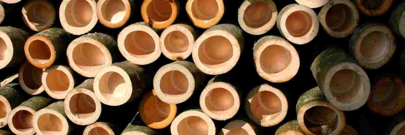 Pourquoi le bambou Moso est-il si durable ?